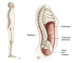 Factores del estilo de vida moderno, pueden ejercer tensiones sobre la postura.