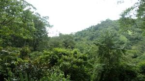 Más de 5 millones de hectáreas en 4 mil 345 Reservas se encuentra en manos de la Alianza Latinoamericana de Reservas Naturales Privadas