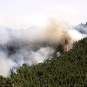 Educación ambiental para evitar incendiosforestales