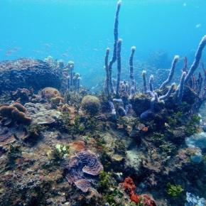 10 de Marzo de 2016 – Día Internacional del ArrecifeMesoamericano
