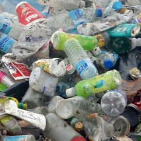 Bacteria que descompone elplástico