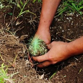 Guatemala, un país aún con poca concienciaambiental