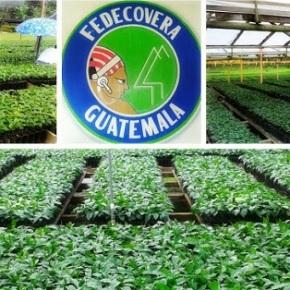 Experiencias de productoresagroforestales