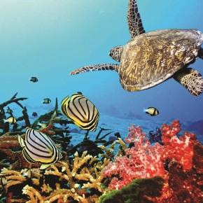 Una nueva esperanza para los arrecifes decoral