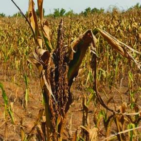 FAO aborda crisis de la sequía enCentroamérica