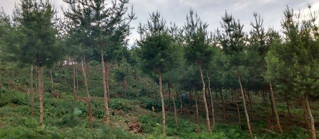 Reforestadora Industrial, S.A. 40 años cuidando los bosques ...