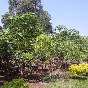 Alianza impulsa desarrollo de cultivos resistentes al cambioclimático