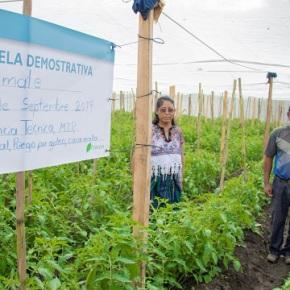 Guatemala proyecto de soluciones innovadoras para cadenas de valoragrícola