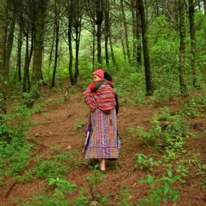 Cuarto pago de incentivos forestales beneficia a más de 5 milfamilias