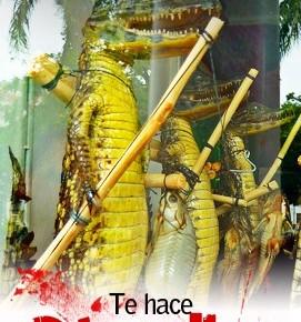 Estudio revela 15 amenazas para la vida silvestre enCentroamérica
