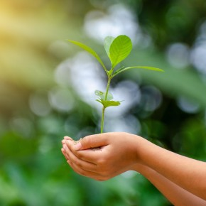Nestlé lidera iniciativa para reactivación económica y combate al cambioclimático