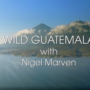 "Nigel Marven, muestra adelanto del programa ""WildGuatemala"""