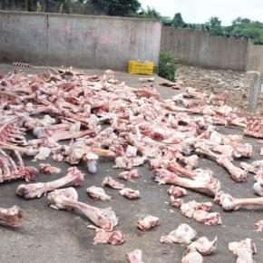 Cierran botadero ilegal de desechos de ganadovacuno
