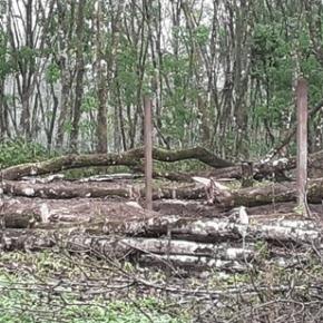 Invasores en Alta Verapaz destruyen el medioambiente