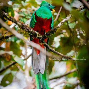43 Aniversario del Biotopo Protegido delQuetzal