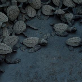 Julio, temporada de anidación de TortugasMarinas