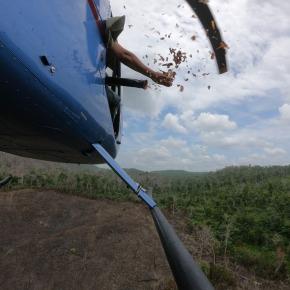 Lluvia de semillas en la Reserva de la BiosferaMaya