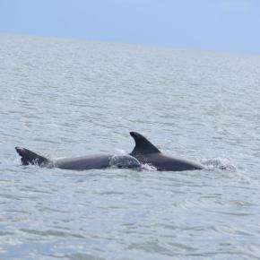 Cada dos minutos un delfín, una marsopa o una ballenamuere