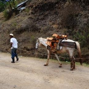 Consumo de madera y leña enGuatemala