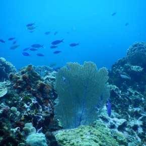 Monitoreo Regional de Conectividad en el ArrecifeMesoamericano