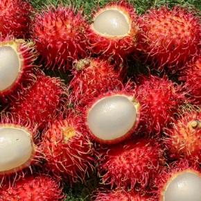 Aumenta el consumo de frutas exóticas de Guatemala a nivelinternacional