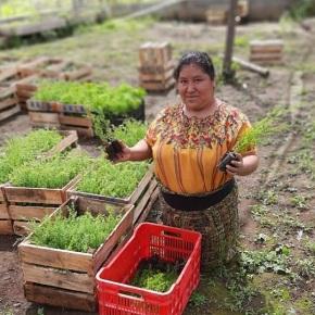 Reforestando Atitlán, para un futuroverde