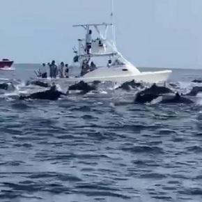 Mancha de delfines en el Pacíficoguatemalteco