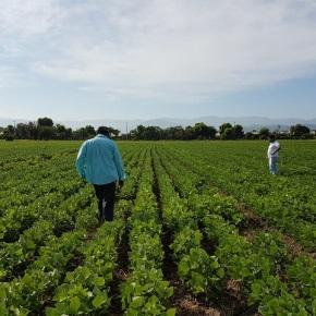 Foragro quiere hacer de Centroamérica un ejemplo de exportación yagricultura