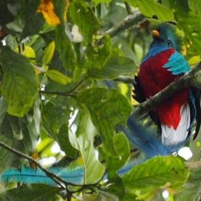 5 de septiembre, Día del Quetzal, Ave Nacional deGuatemala