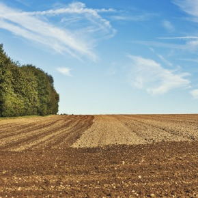 La agricultura, como pilar de laeconomía