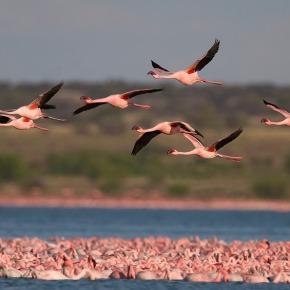 Día Mundial de las AvesMigratorias