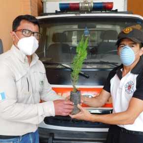 19 mil 658 amigos del bosque, reforestaron Guatemala en2020