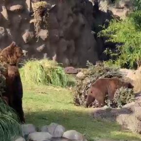Los animales del Zoo disfrutan los árboles denavidad