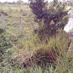 Se recuperan 90 hectáreas usurpadas en la Reserva de BiosferaMaya