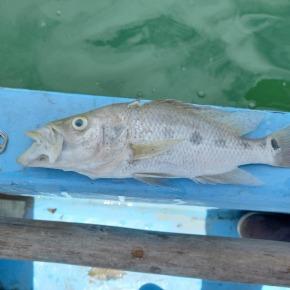 MARN verifica muerte de peces en Flores,Petén