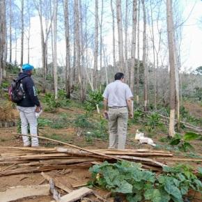 Hombre taló 1 mil 700 árboles enYamasá