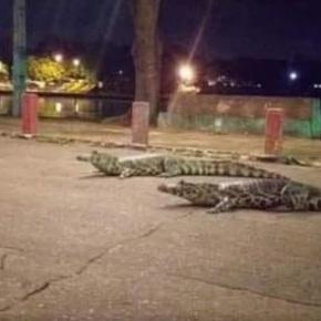 Caimanes invadieron un centro comercial deParaguay