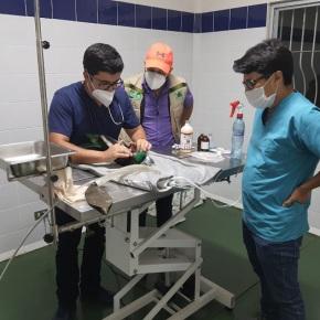 Fallece Quetzal rescatado enMazatenango