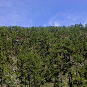 """""""Restauración Forestal"""" el lema en el Día Internacional de losBosques"""