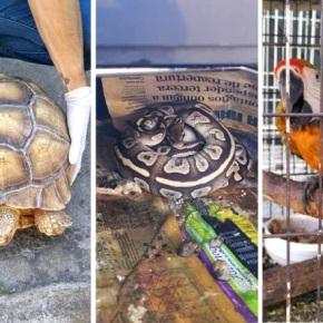 Capturan a sospechoso de usar animales silvestres en CostaRica