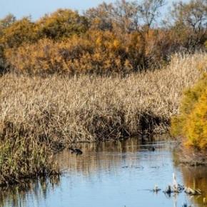 Juicio por el saqueo de agua del Parque Nacional Doñana enEspaña