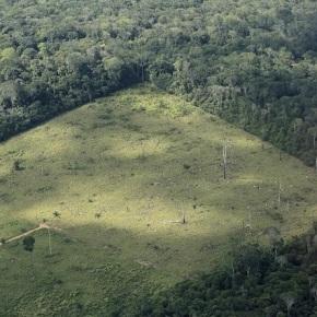 Países de la UE y la deforestacióntropical