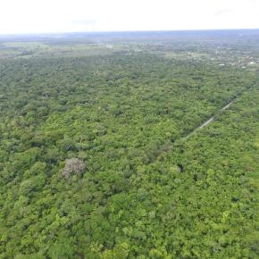 INAB invita a reforestar para restaurar, en el Día de la MadreTierra