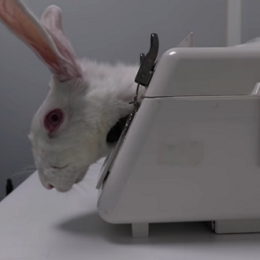 Supuesto maltrato animal en el laboratorioVivotecnia