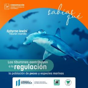 """CONAP y WCS lanzan campaña para la """"Conservación Marino Costera enGuatemala"""""""