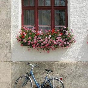 Día Mundial de laBicicleta