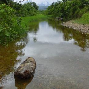 25 Aniversario del Refugio de Vida Silvestre Bocas delPolochic