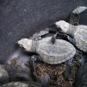 Día Mundial de las TortugasMarinas