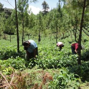 MINFIN e INAB realizan segundo pago de incentivos forestalesPINPEP