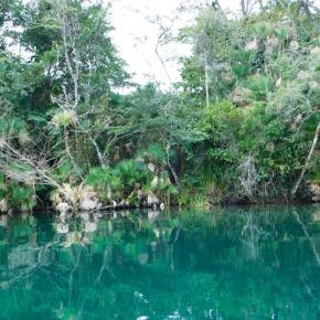 Importancia de los trópicos para el bienestar de los ecosistemas enGuatemala